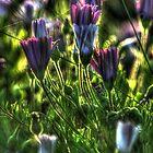 SpringFlowers_5936 by sasakistudio