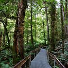 Yarra Ranges National Park by Ross Campbell