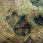 Dinosaur Tracks in the River by Lisa Holmgreen