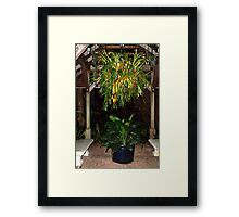 Night oasis Framed Print