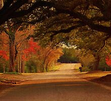Fall Along A Country Road by Kathy Baccari