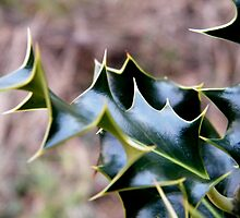 Holly by ElsT