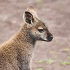Wallaby by afincher