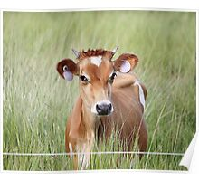 Cute Cow! Poster