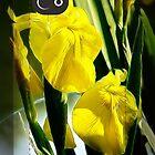 Yellow Irises iphone case by vigor
