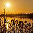 Another late afternoon at Harrold country park by rexhank