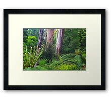 Mountain Ash and Tree Ferns. Framed Print