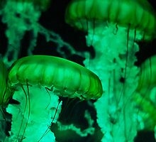 Green Jellies by Jarede Schmetterer