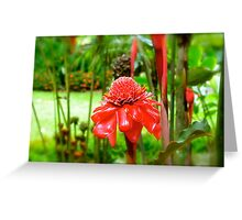 Red Torch Ginger Lily Greeting Card
