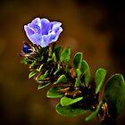 Purple Flower by Mr T