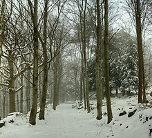 The Path In Winter by VoluntaryRanger