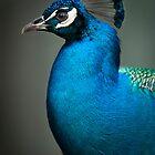 Peacock Subtlety  by Joe Jennelle