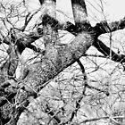 Gnarled and bent, like so much of life by Scott Mitchell
