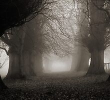 Into The Mist by Will Corder | Photography
