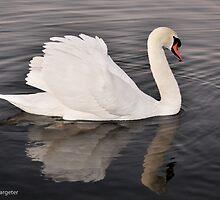 Serene Swan by rexhank
