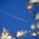 Fly me to the moon by catalinpopro
