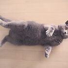 British shorthair cat by EllieGoldwine