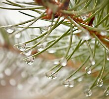 Winter raindrops by Amanda Creamer
