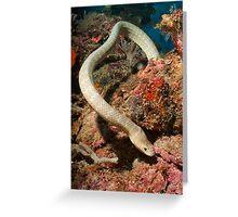 Olive Seasnake, Papua New Guinea Greeting Card