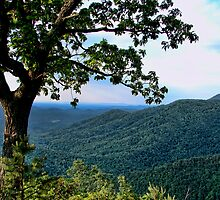 The Blue Ridge Parkway by Carolyn  Fletcher