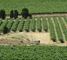 Barossa Valley microview by GMerks