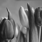 Monochrome Tulip Heads by karina5