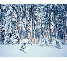 WINTER TIME IN FOREST Photographic Print