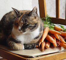 Tabby Calico Cat with Carrots by Titia Geertman