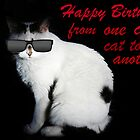 Cool Cat Card by Ladymoose