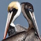 A Pair of Pelicans by KAREN SCHMIDT