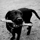 My Stick by Rowan Kanagarajah