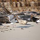 Seals & Sea gulls by Amanda Huggins