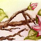 flowering tree branch by Dawna Morton