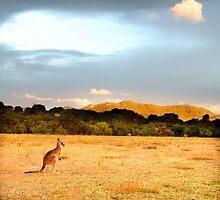 Wilsons Promontory 2012, Vic, Australia. by Dirk Michael Dudat