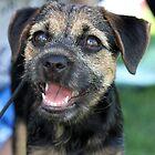 Warrnambool Dog Show by sherele
