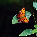 Gray Comma..... by DaveHrusecky