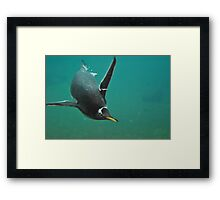Come in, the waters Lovely!! Framed Print