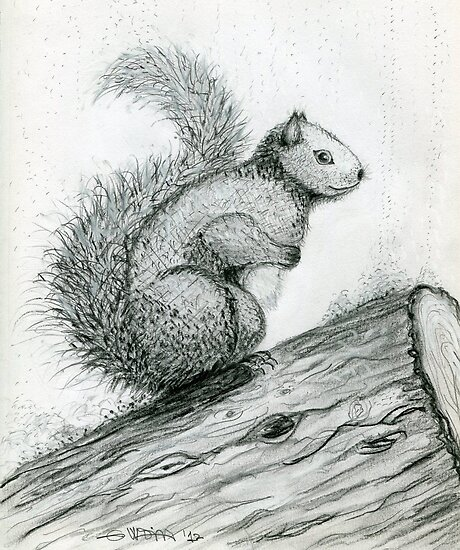 The Perched Squirrel by Kashmere1646