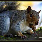 Squirrel by AngieBanta