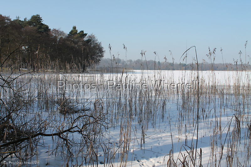 The frozen pond III by Photos - Pauline Wherrell