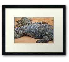 Crocodiles Framed Print