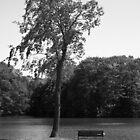 Serenity by Kerri Swayze