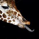 Tonge of the Giraffe by David Lee Thompson