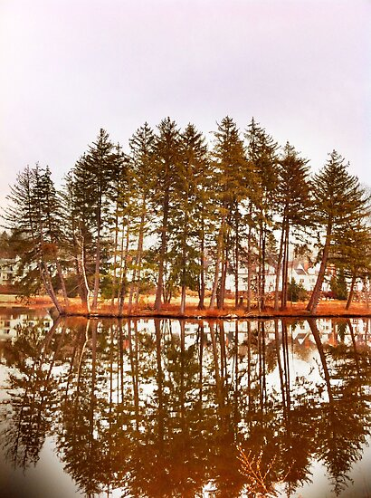 Mirror Images Of Trees by daphsam