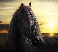 frisian sunrise by lucyliu