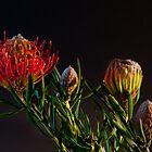Nodding Pincushion Protea by Lee LaFontaine