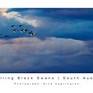 Travelling Black Swans: South Australia by Nick Egglington