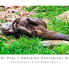 Otter At Play : Adelaide Zoological Gardens by Nick Egglington