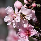 Busy Bee in the Peach Tree! by heatherfriedman