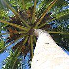 Palm tree in Paradise by taryn88